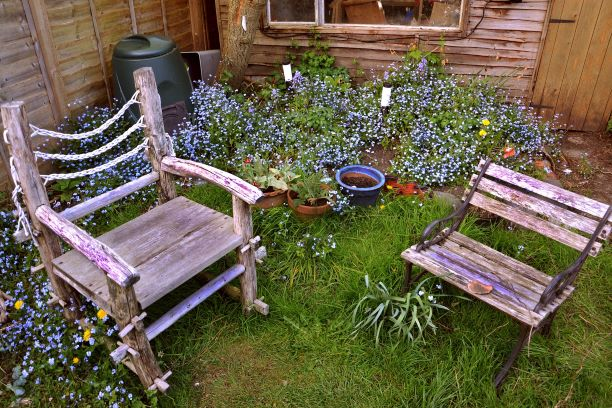 old wood chairs and purple flowers in back yard